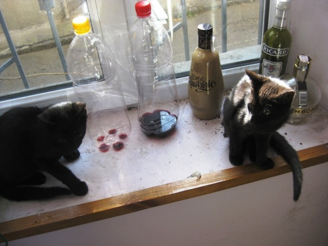 """Of course, """"Pickles"""" and """"Onions"""" had to go.  We renamed them Cosmos (left) and Bailey (right) after space (because Cosmos is black) and Bailey's (because Morgan had had some Bailey's that afternoon at Wendy's. [Gosh European fast food is great!])"""