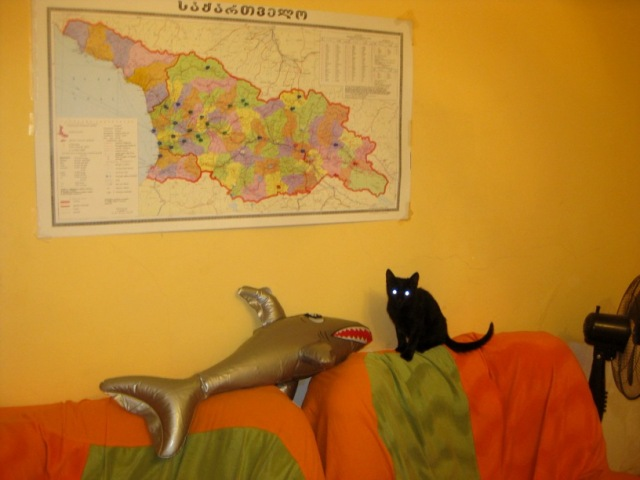 They've made good friends with The Shark, a gift from my friend the British Diplomat.