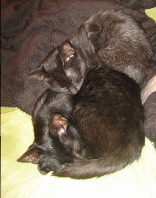 Sleeping Kitten Pile.