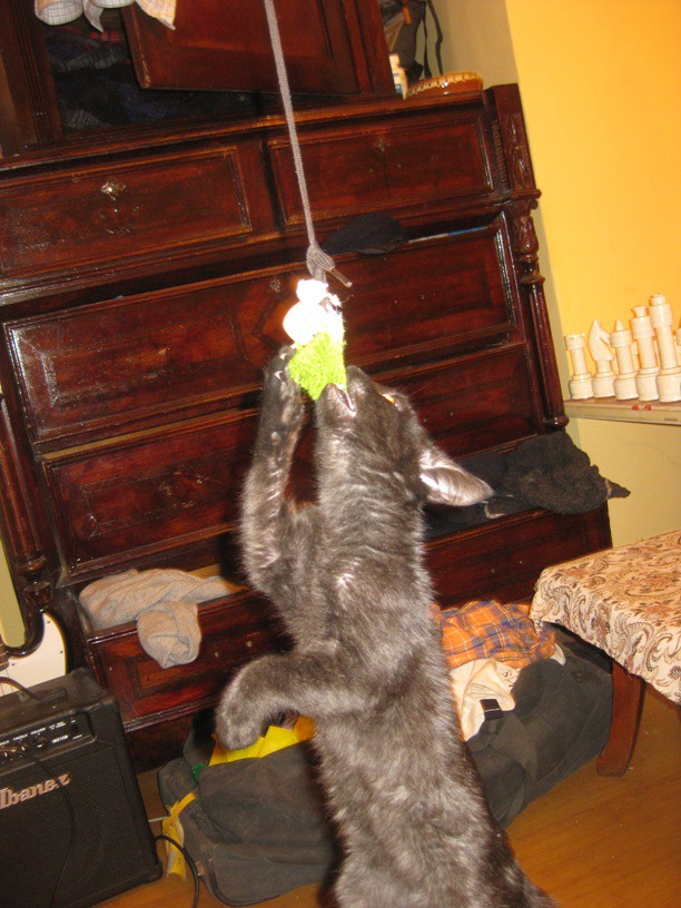 Seeing that they needed a way to blow of steam, I created a handmade cat toy for them!  Bailey was really into it, and it's pretty fun to go fishing for cats!