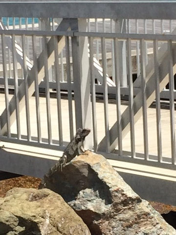 Just look at this little guy, doing his best Pride Rock as he sunbathes by the pier!
